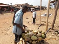 ein-ex-combattant-verkauft-taeglich-eine-schubkarren-ladung-frische-kokosnuesse-die-er-vorher-gefaehrlichst-selbst-gepflueckt-hat